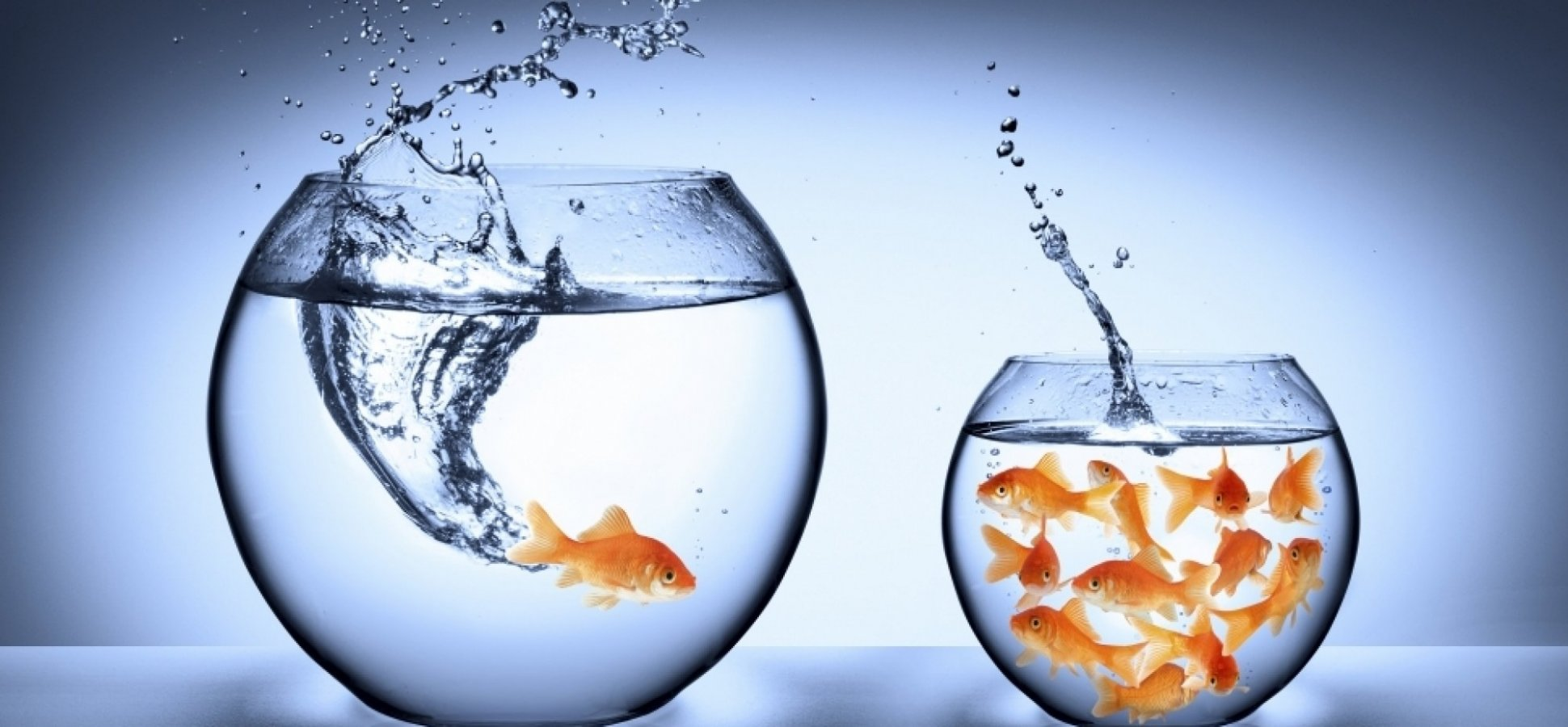 Small Fish, Big Pond: Can Small Business Survive on Social Media?